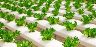 how to start vertical farming business