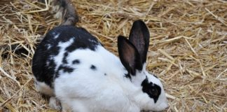 commercial rabbit farming business plan