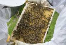 bee farm business plan