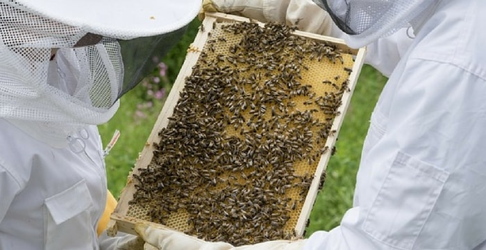 Bee Farming Information For Beginners – Business Plan