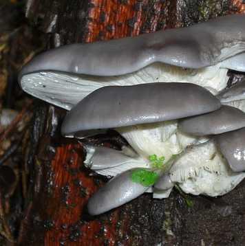 mushroom farming business
