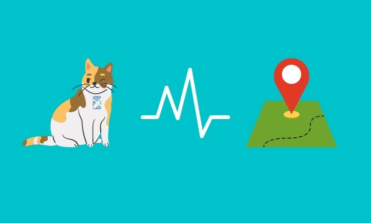 Business Opportunities in Pet Wearable Industry – An Overview