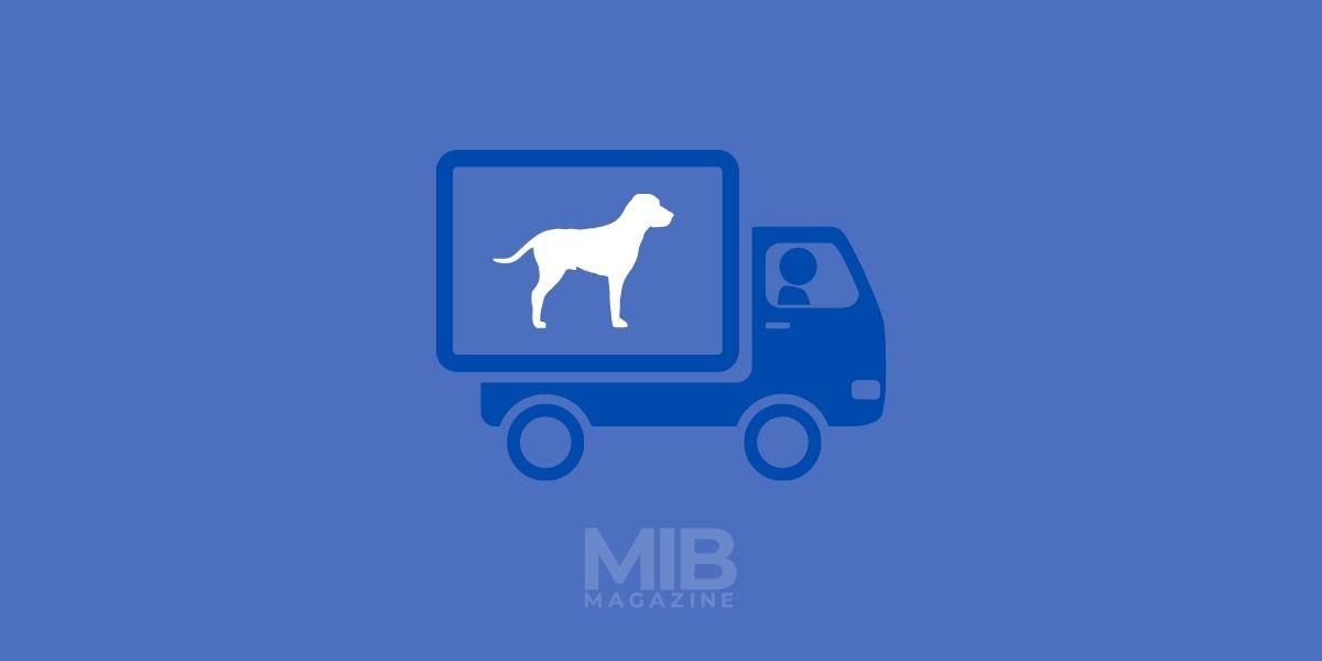 a pet taxi transporting dog